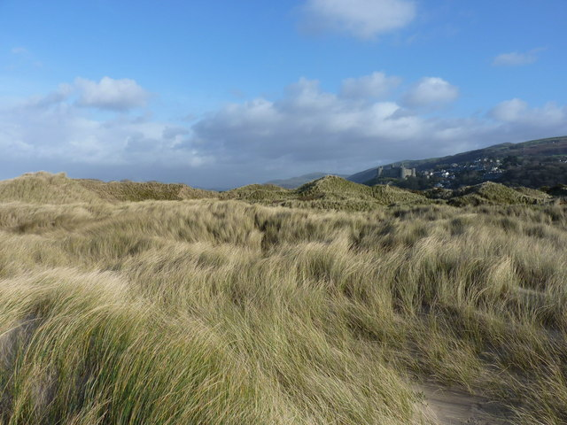 Sand dunes at the back of the beach