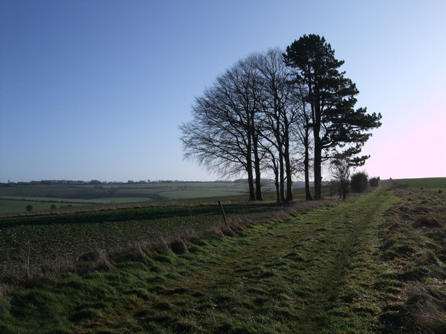 Trees on Bridleway from Four Barrows to Aldbourne