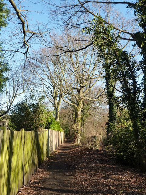 Footpath south of Forest Drive