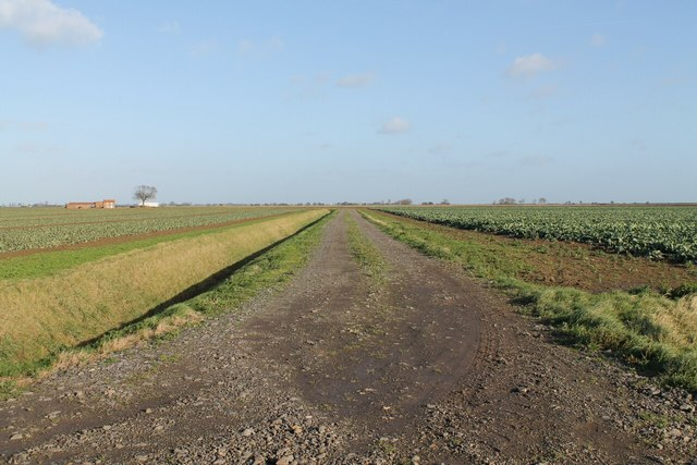 Drain and Track with Crops, off Sea Lane