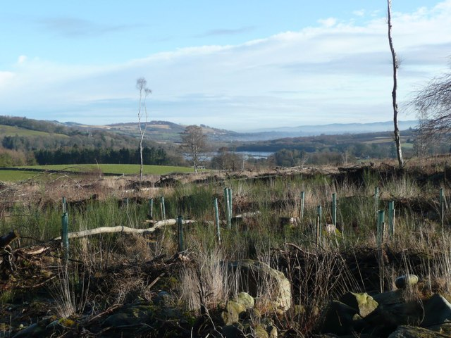 Forest cleared and replanted