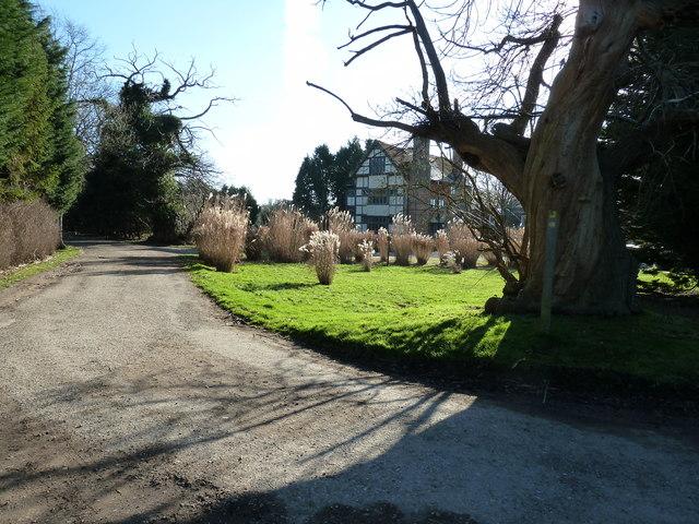 Ancient tree by Wapsbourne Farmhouse