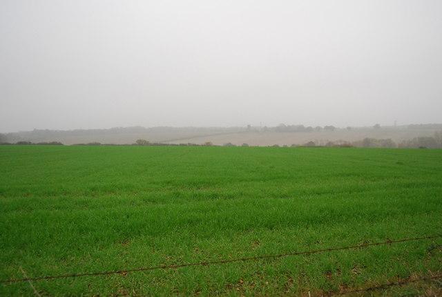 Wheat near Buckwell Farm