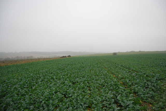 Root crop, Buckwell Farm