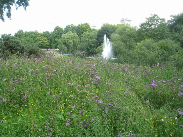 Wilderness in St James Park