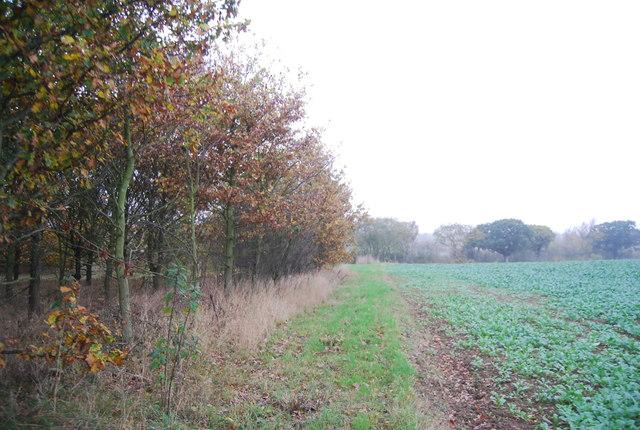 Edge of Cadehill Wood