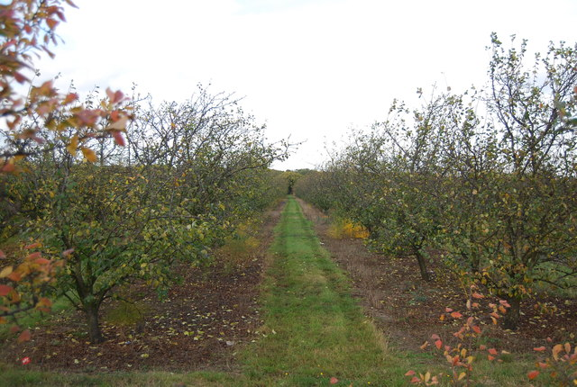 Orchard by the A228