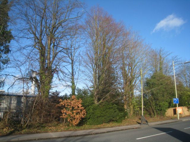 Trees along Worting Road