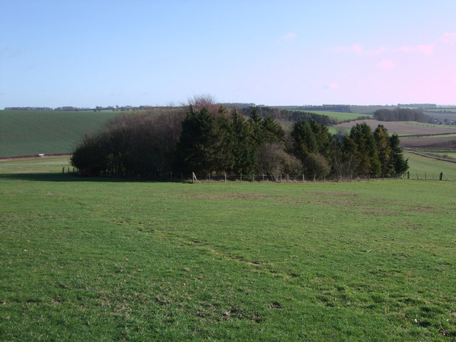 Plantation of trees near Old Barn