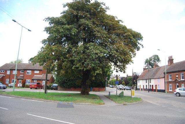Tree, Station Rd