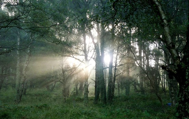Sun streams through the woods at Hill of Coull