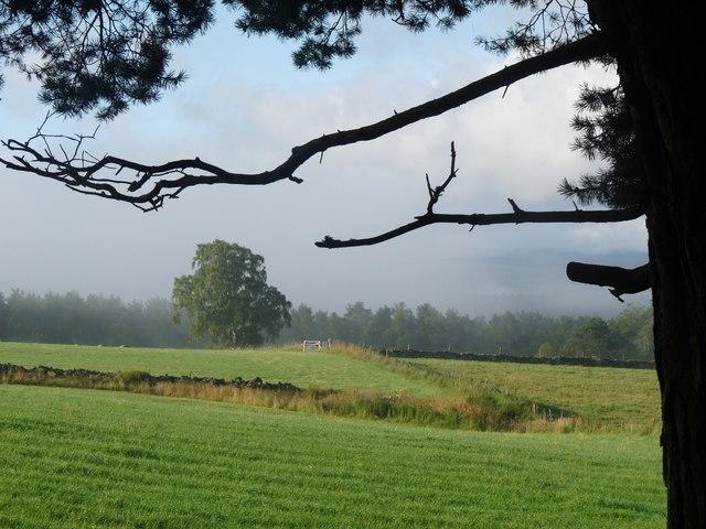 Fields at Reekitlane