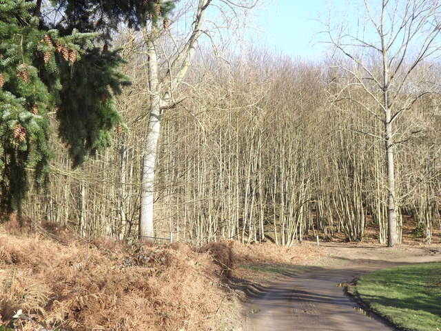Approaching Great Copse