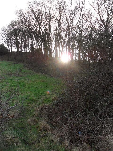 Longley Hill Plantation