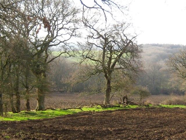 Near How's Coppice Hardington Marsh