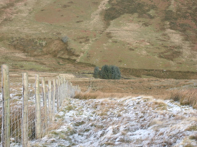 Trees on Afon Disgynfa taken from above Cwm Glaywfa