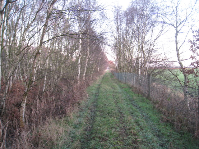 Track on the edge of Misson Carr Nature Reserve