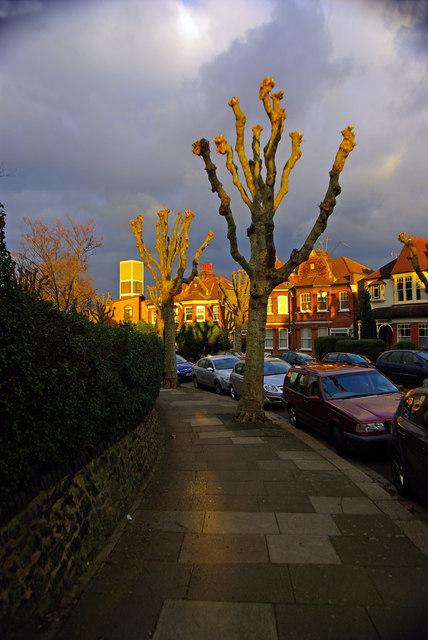 Pollarded trees, Hornsey