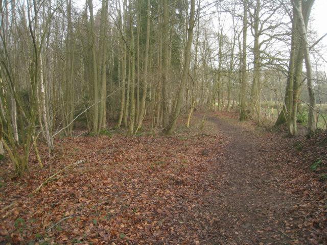 Path around Brock Copse
