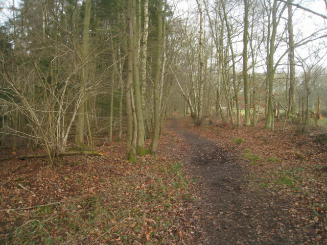 Path around Brock Copse
