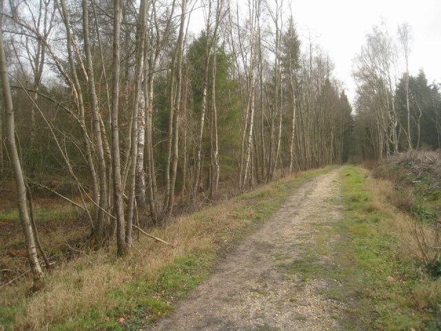 Path in Sandford Wood