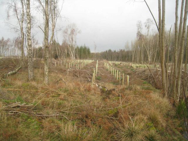 A new wood emerges