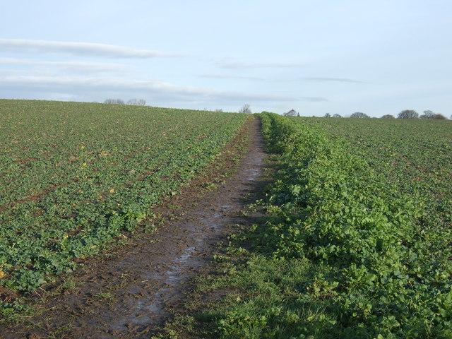 Footpath towards Scholes