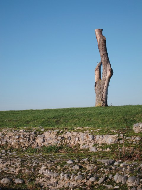 Tree at Richborough Castle