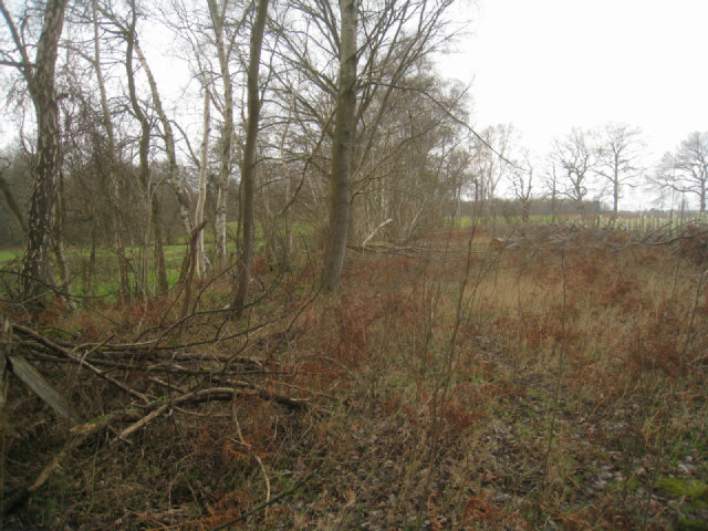 Edge of Sandford Wood