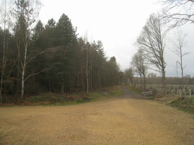 Forest track - Sandford Wood