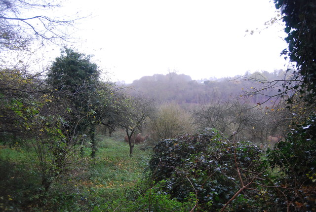 Orchard by Busridge Rd
