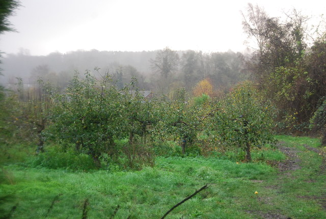 Orchard on the edge of Loose