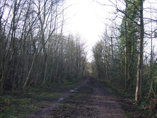 Bridleway towards Parlington