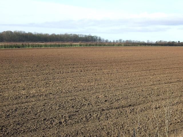 Farmland, Nut Hill