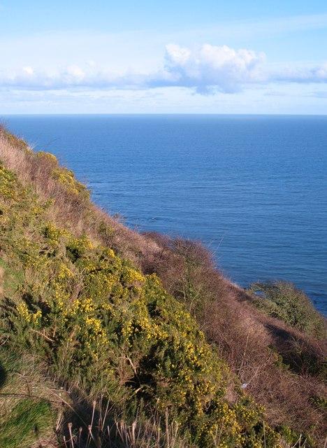 Vegetated cliff edge above The Wyke