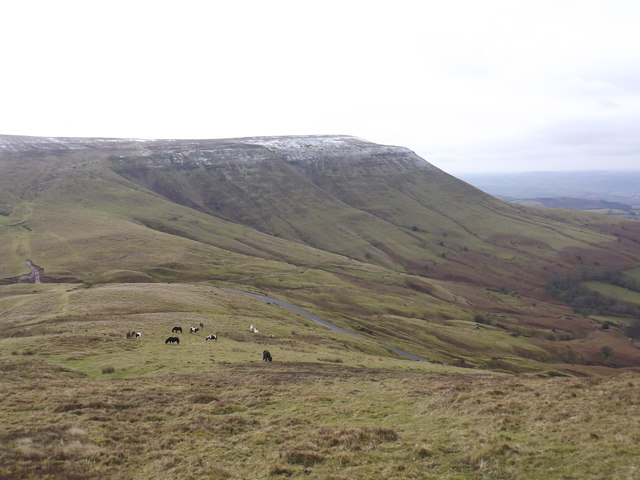 Lord Hereford's knob