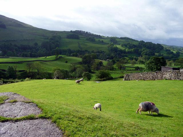 Sheep Grazing, Troutbeck, Cumbria