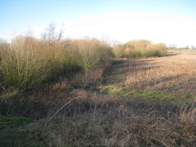 Plantation on former sand pit