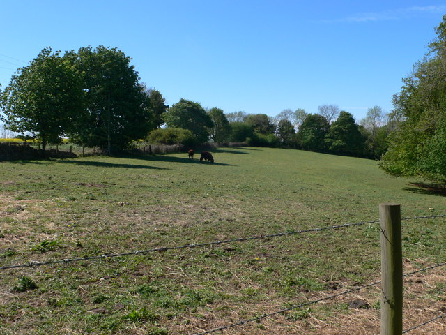 Meadow with horses near Sheepscombe