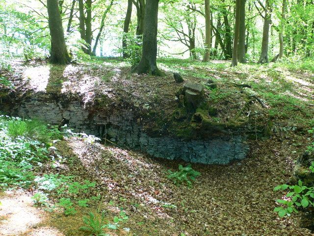 Witcombe Wood, south of Bridlip