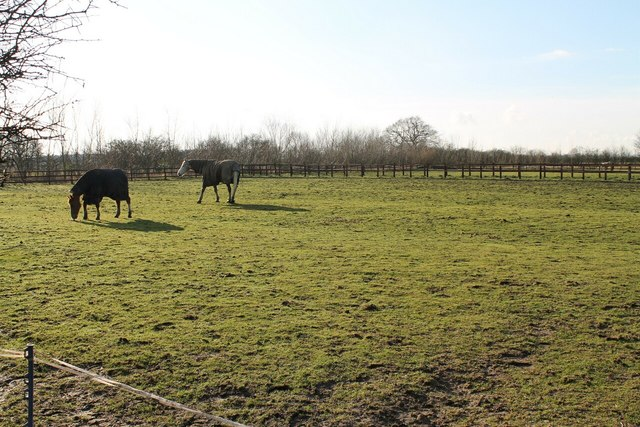 Paddock with Horses, off Mill Lane