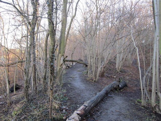 A permissive path at Becca Banks