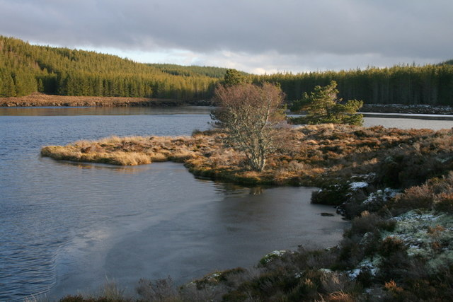 A lone Alder and two Scots Pines by Loch Dallas
