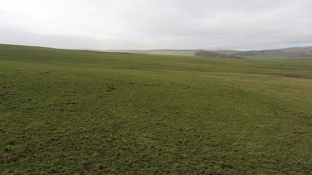 Improved pasture, Symington Hill