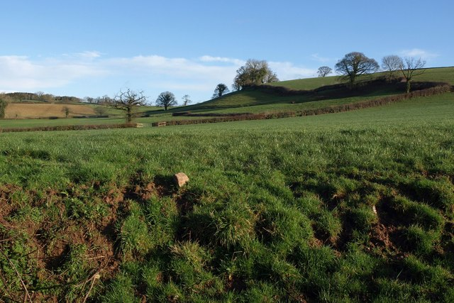 Pasture east of Curscombe