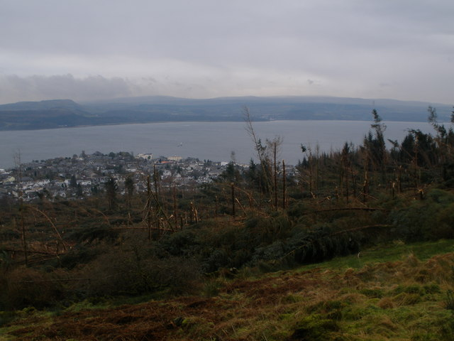 Large exspanse of broken and fallen trees in the forest above Dunoon
