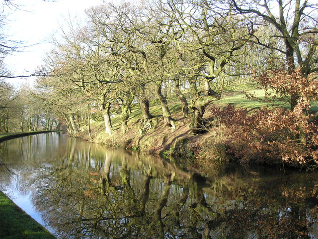 Trees by the canal