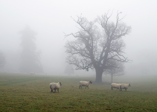 Misty morning in Ickworth Park