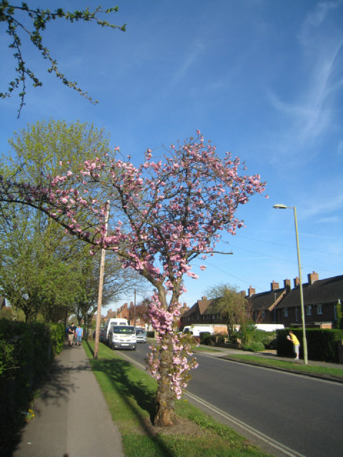 Pink - Queen Mary Avenue
