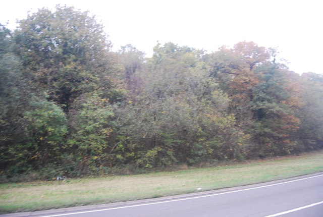 West Blean Wood by the A291